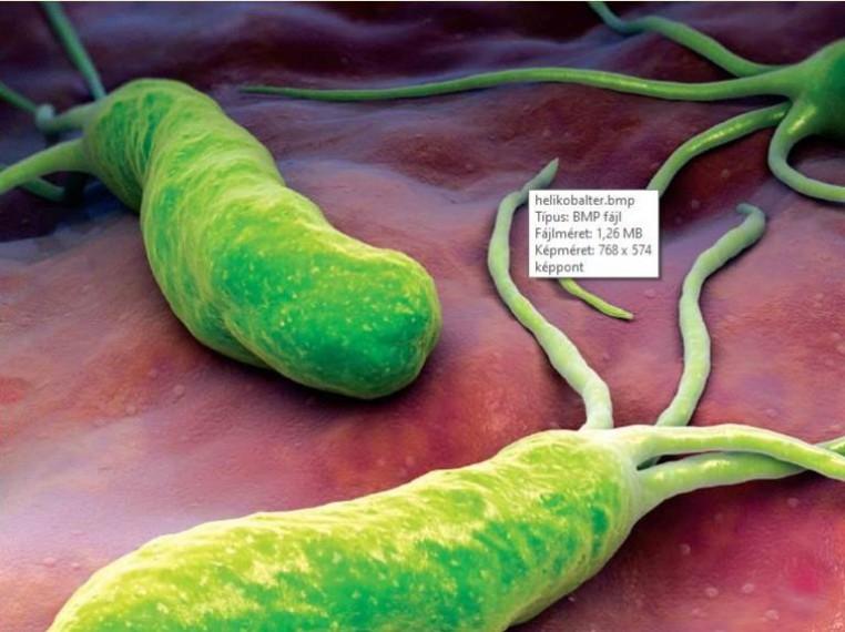 OTSZ Online - Rezisztens baktériumok